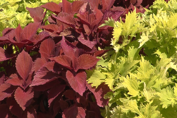 Colorful foliage that will last all summer