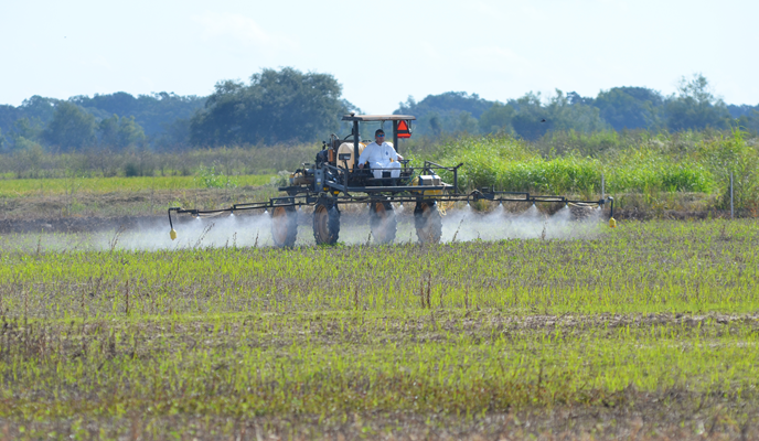 Research associate Ben McKnight drives a spray rig over a field to apply glyphosate on volunteer hyb