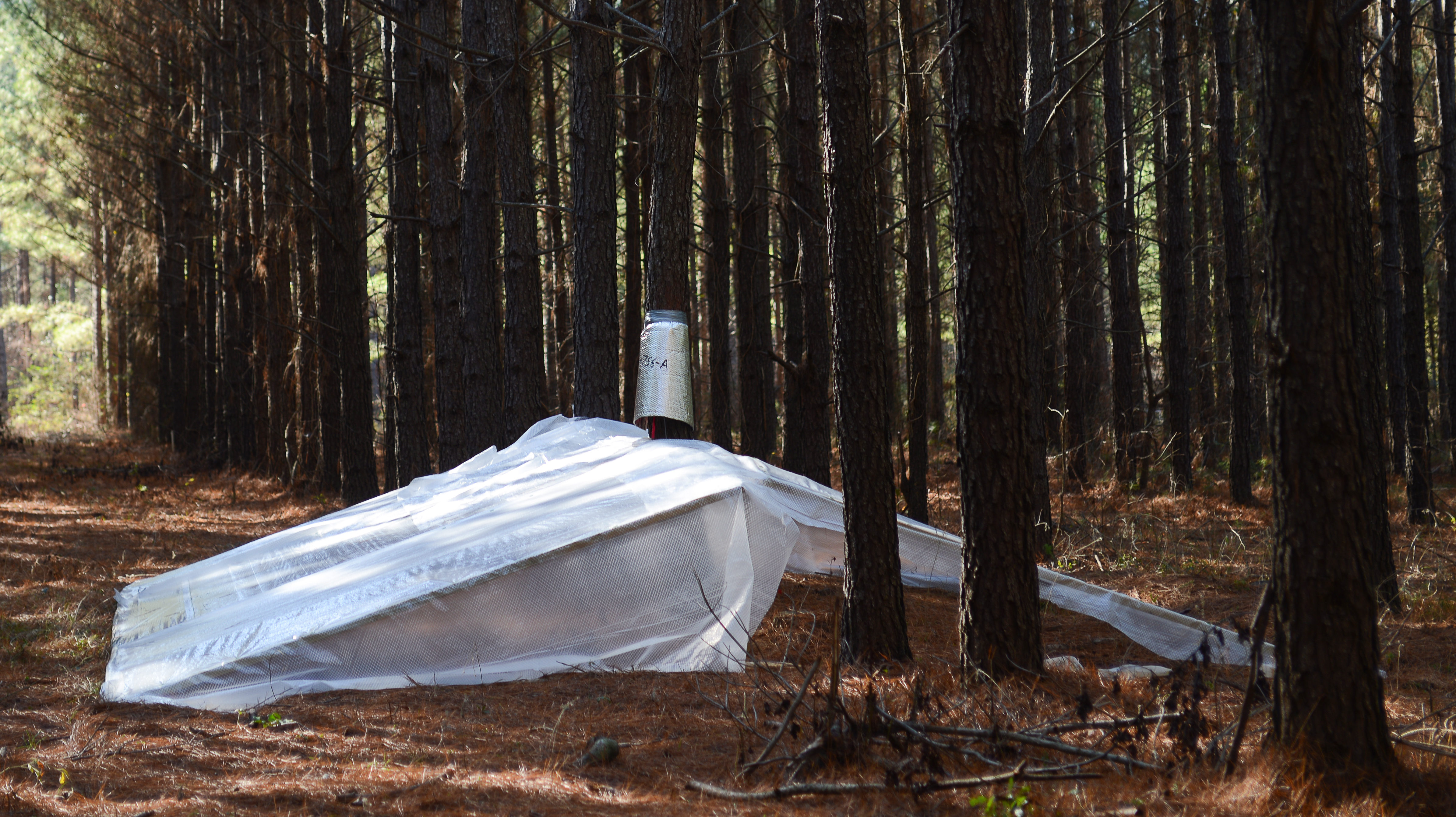 plastic shelter in forest.jpg thumbnail