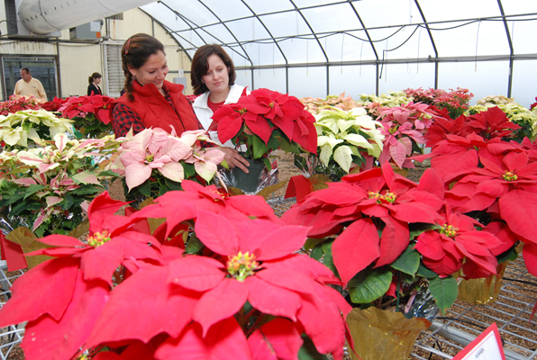 EllisandKerinadmirepoinsettias