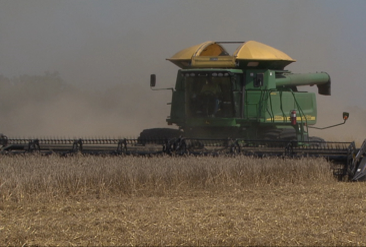 Wheat harvest disappointing
