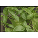 Choose best herbs for your garden