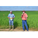 Field day features row rice research
