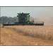 Wheat Growers Are Busy Harvesting Large Crop