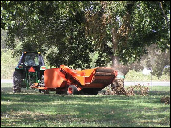 Pecan Harvest Robust But Slightly Down For 2007