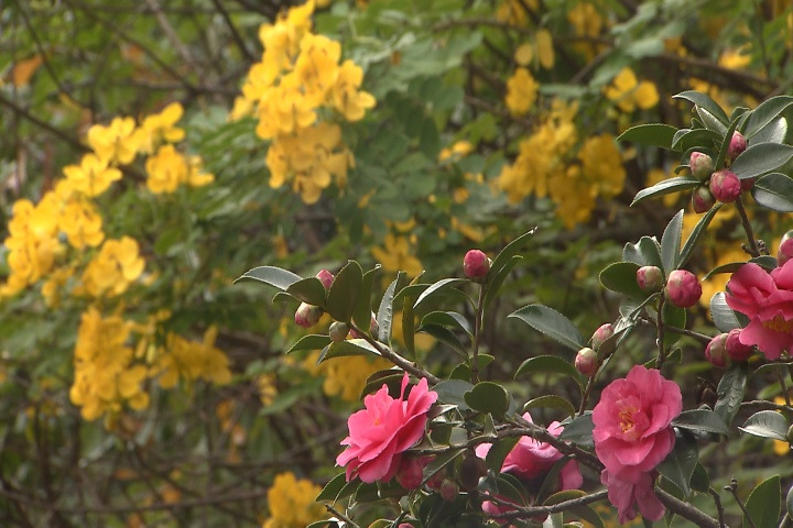 Add late-season color to your landscape