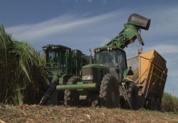 Farmers harvesting better sugarcane crop than expected