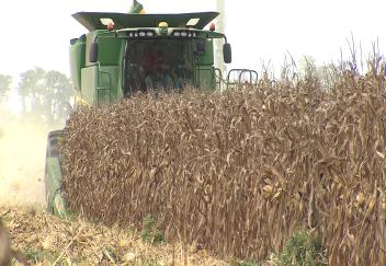 Louisiana corn farmers benefiting from early planting