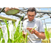 DNA Marker Technologies and Development of New Rice Varieties for Louisiana