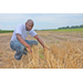 Researcher begins soil quality study in wheat-soybean double crop system