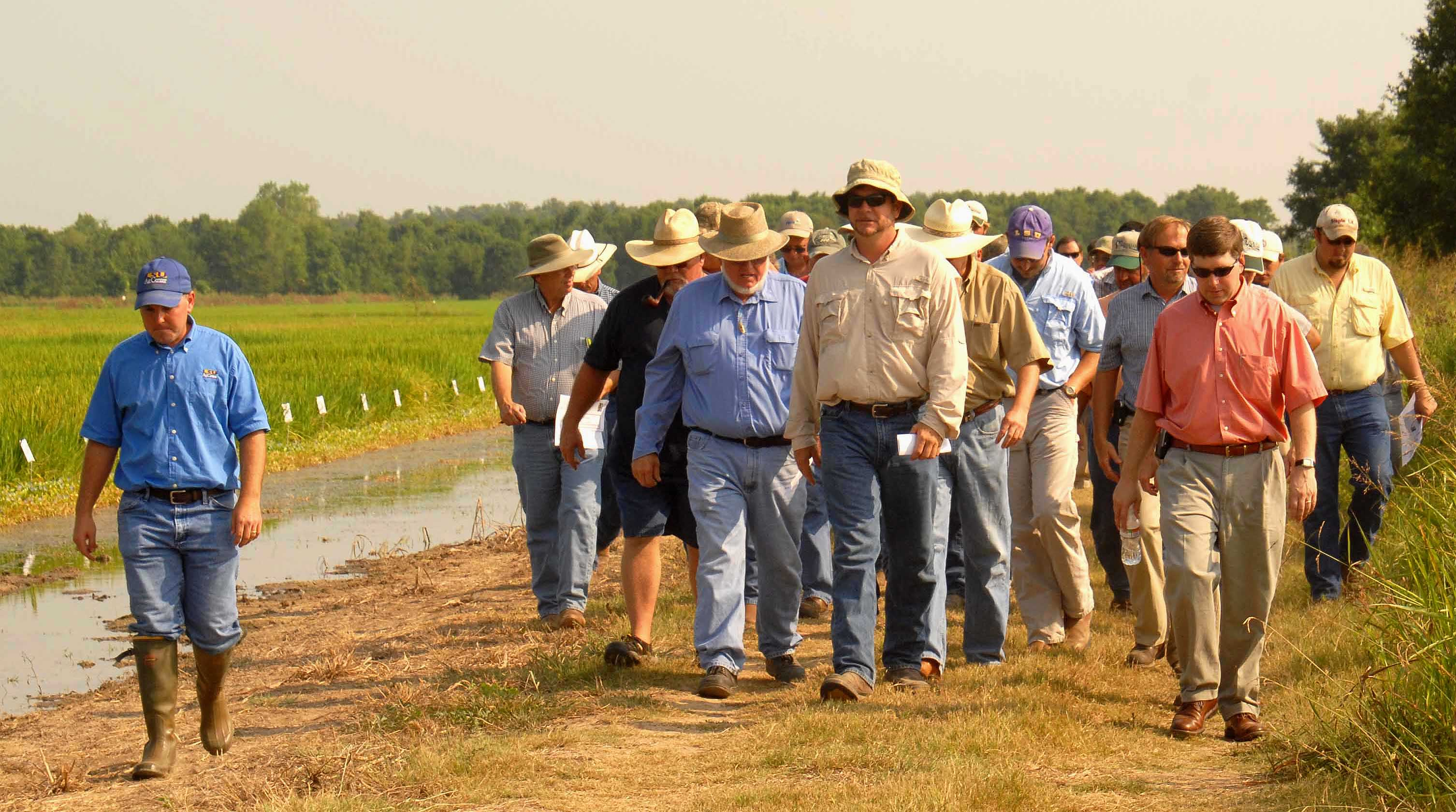 One Clearfield line dropped in favor of two others, farmers told at rice field day