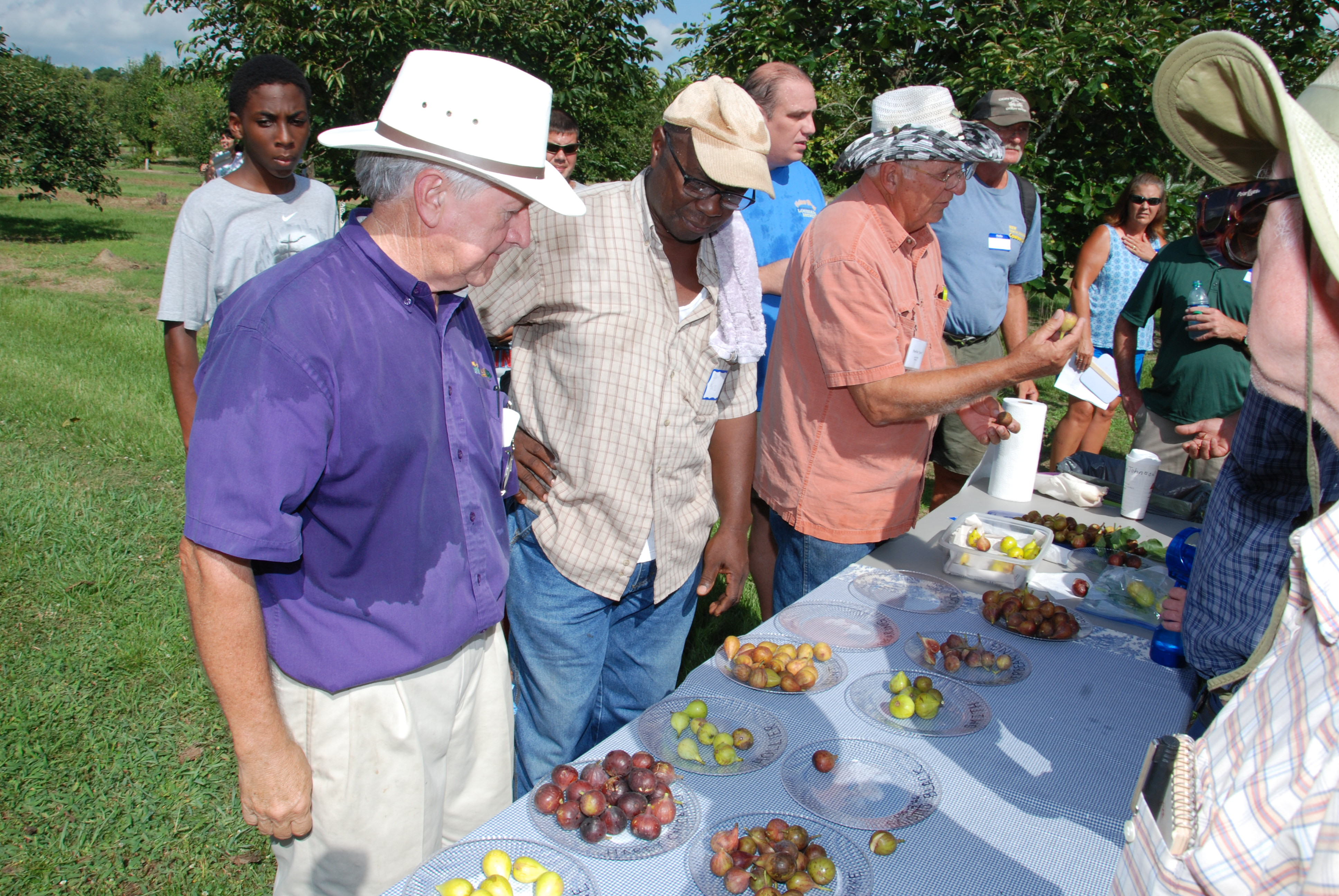 Fig enthusiasts gather for annual field day