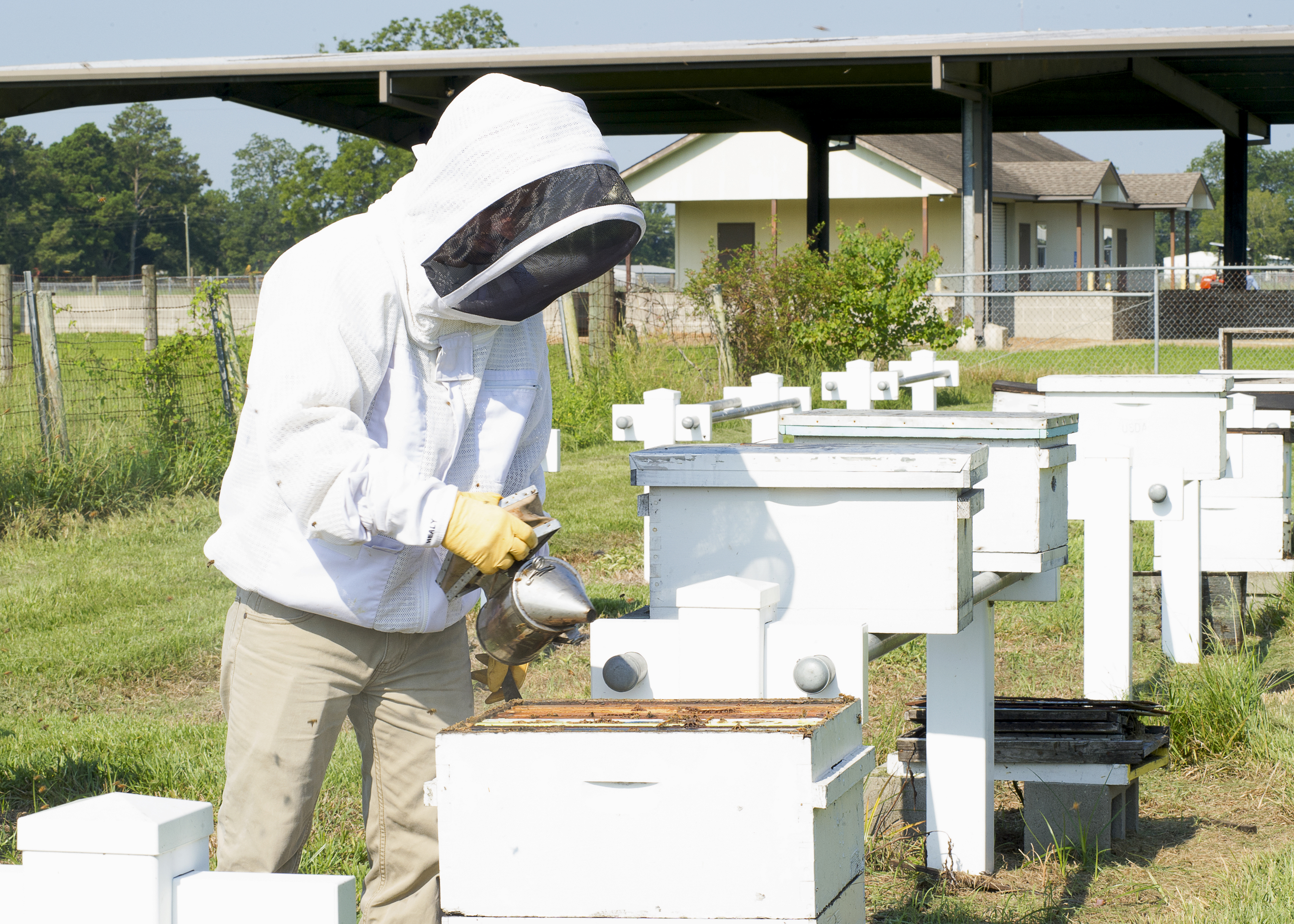 LSU AgCenter researchers receive USDA grant to study pollinator health