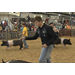 Youth learn responsibility through showing livestock