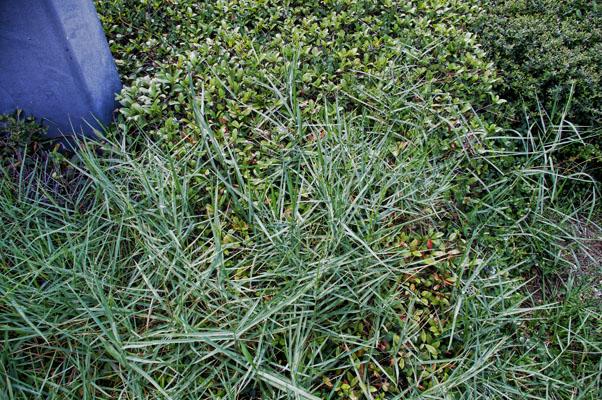 Controlling Weeds In Flowerbeds