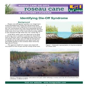 Roseau Cane Die-Offs in Southern Louisiana: Identifying Die-Off Syndrome