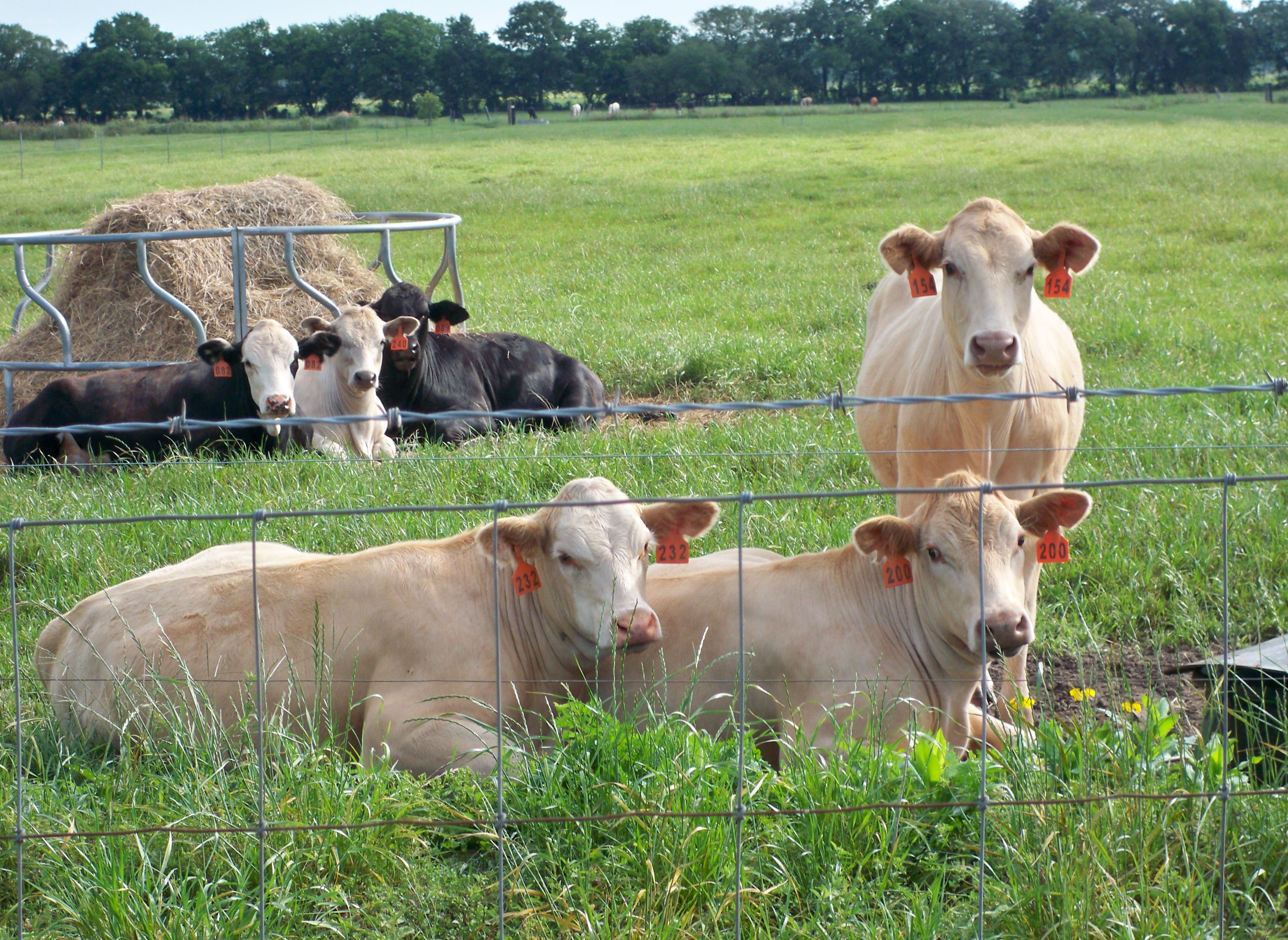 Complexities of Antimicrobial Use in Livestock and Poultry Production
