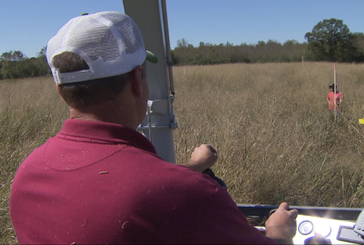 Researchers look at planting switchgrass for biofuel