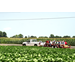 Crop production, pest management field day set for June 16 in St. Joseph
