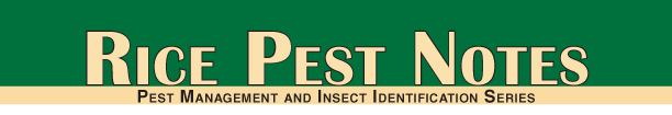 rice pest notes
