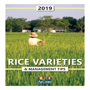 2019 Rice Varieties & Management Tips