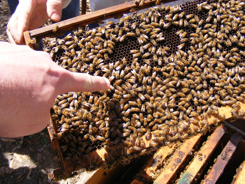Beekeeping becomes a growing hobby in Louisiana