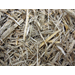Regenerated cellulosic fiber from bagasse