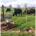 Minimizing Potential Nutrient Runoff in Beef Cattle Production Systems Through Best Management Practices