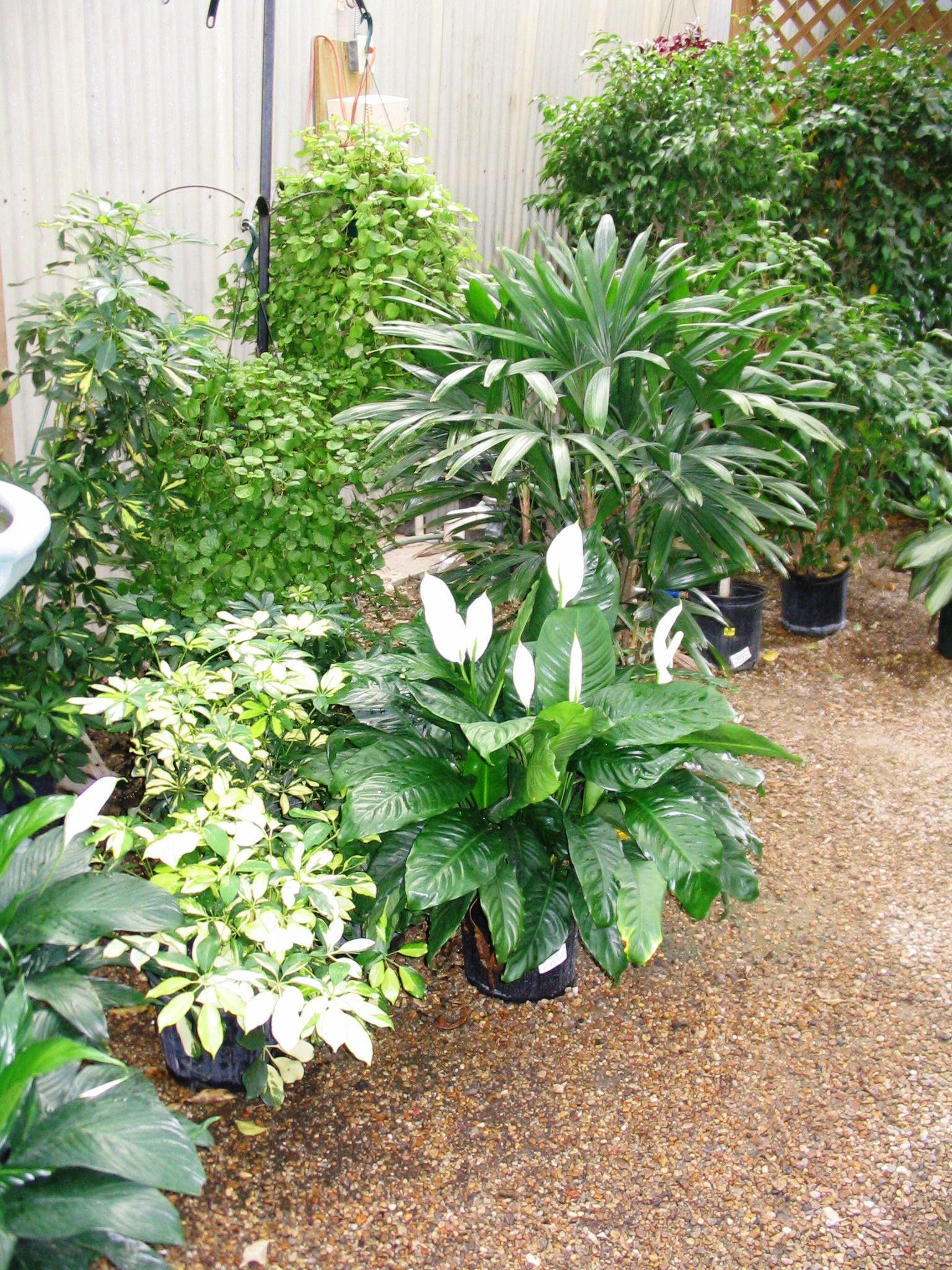 Tropical plants need winter shelter