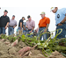 Sweet potato growers learn about varieties, management strategies at field day