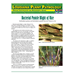 Bacterial Panicle Blight