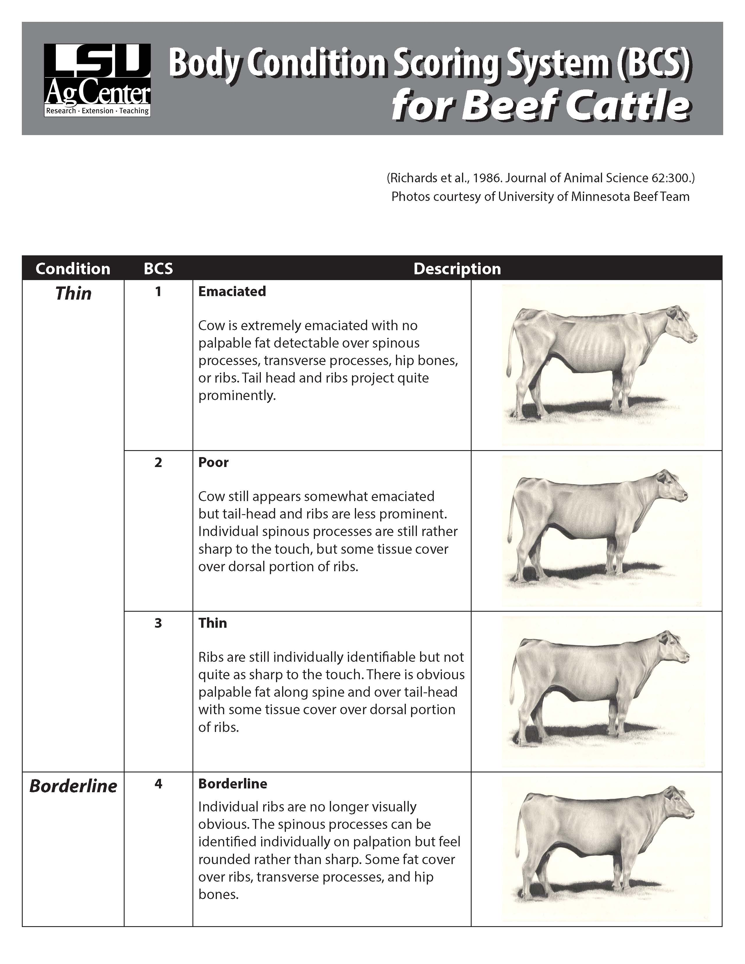 Body Condition Scoring System (BCS) for Beef Cattle