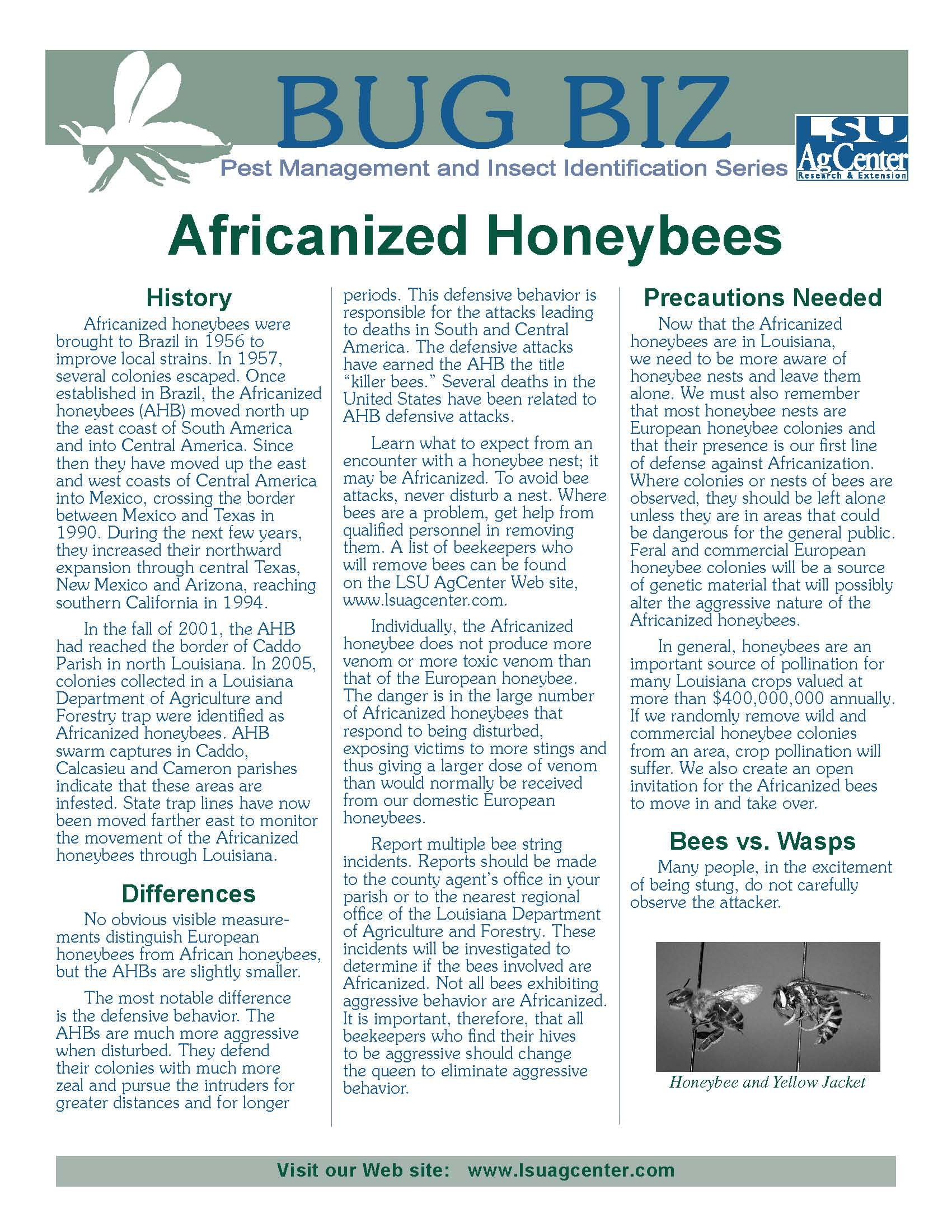 Bug Biz:  Africanized Honeybees