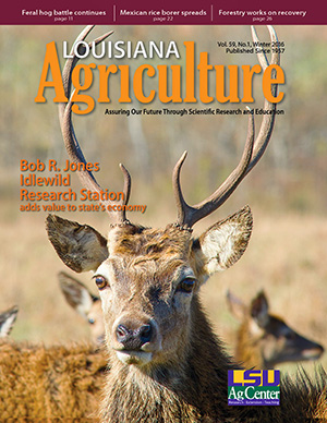 Louisiana Agriculture Magazine Winter 2016 - PDF