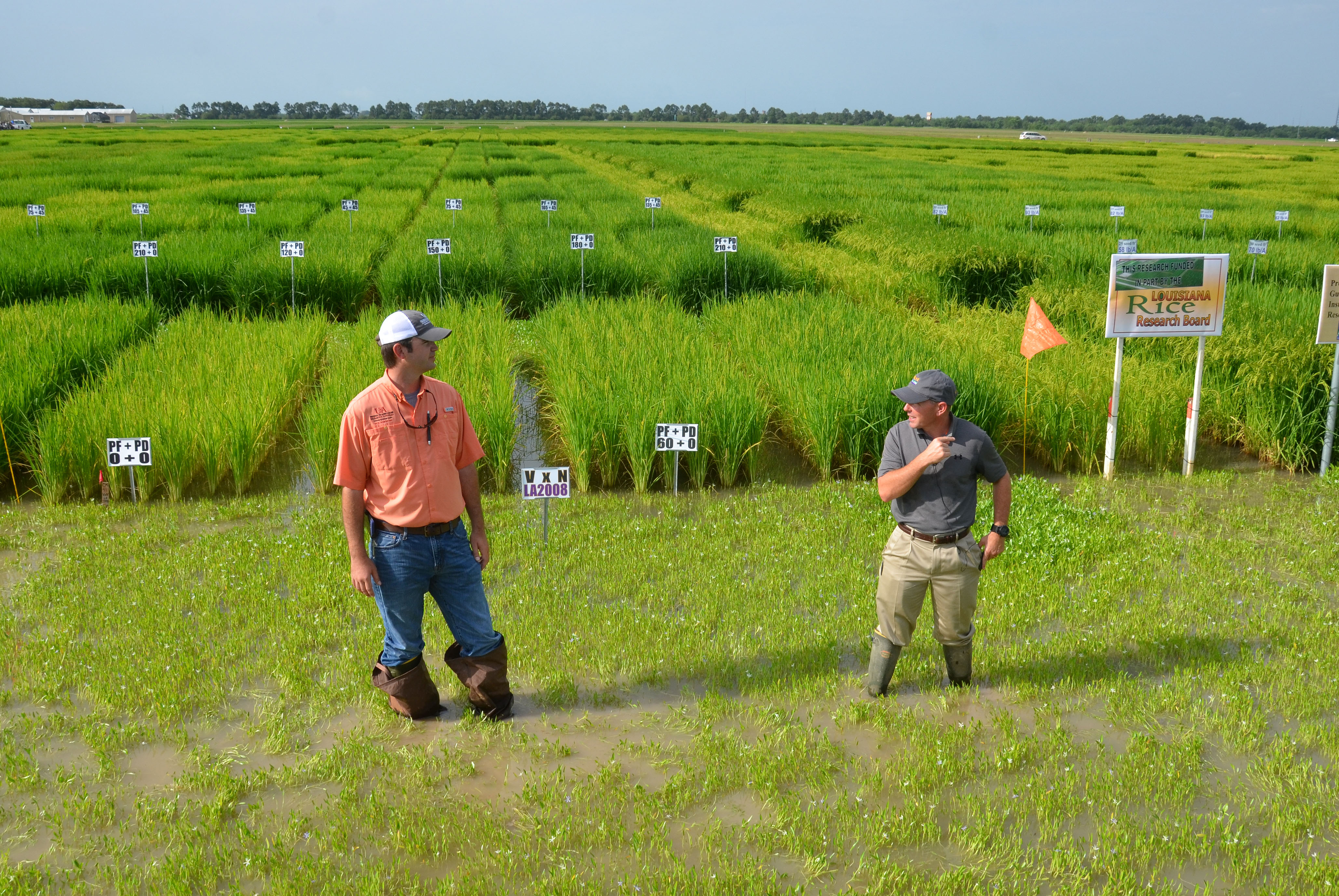 Rice farmers learn about latest research at July 1 field day
