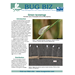 Bug Biz: Green lacewings