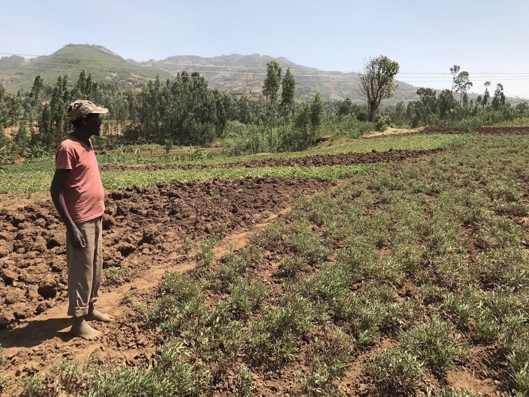 borlaug4 farmer in Ethiopia.JPG thumbnail