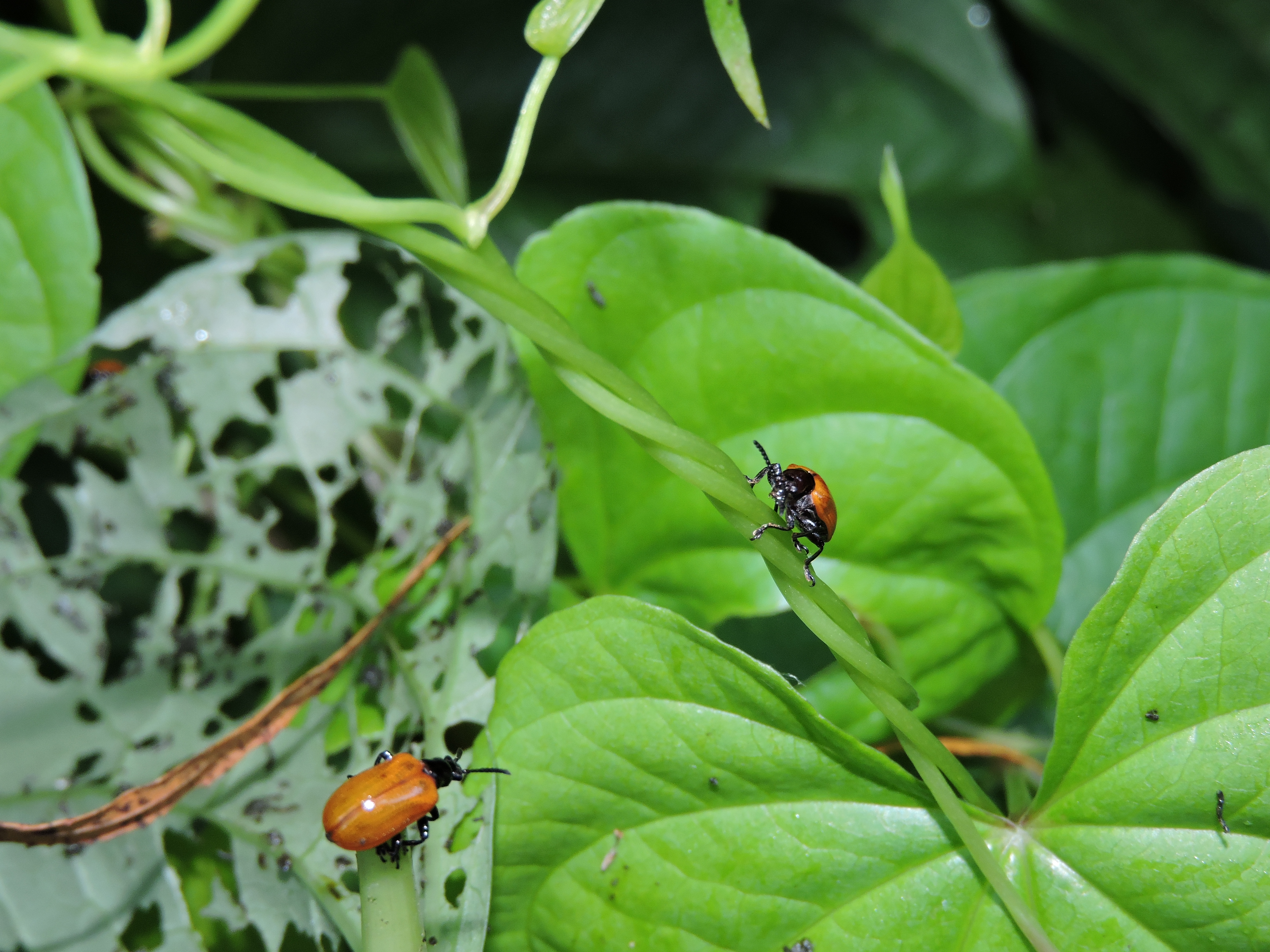 8 Biological control.JPG thumbnail