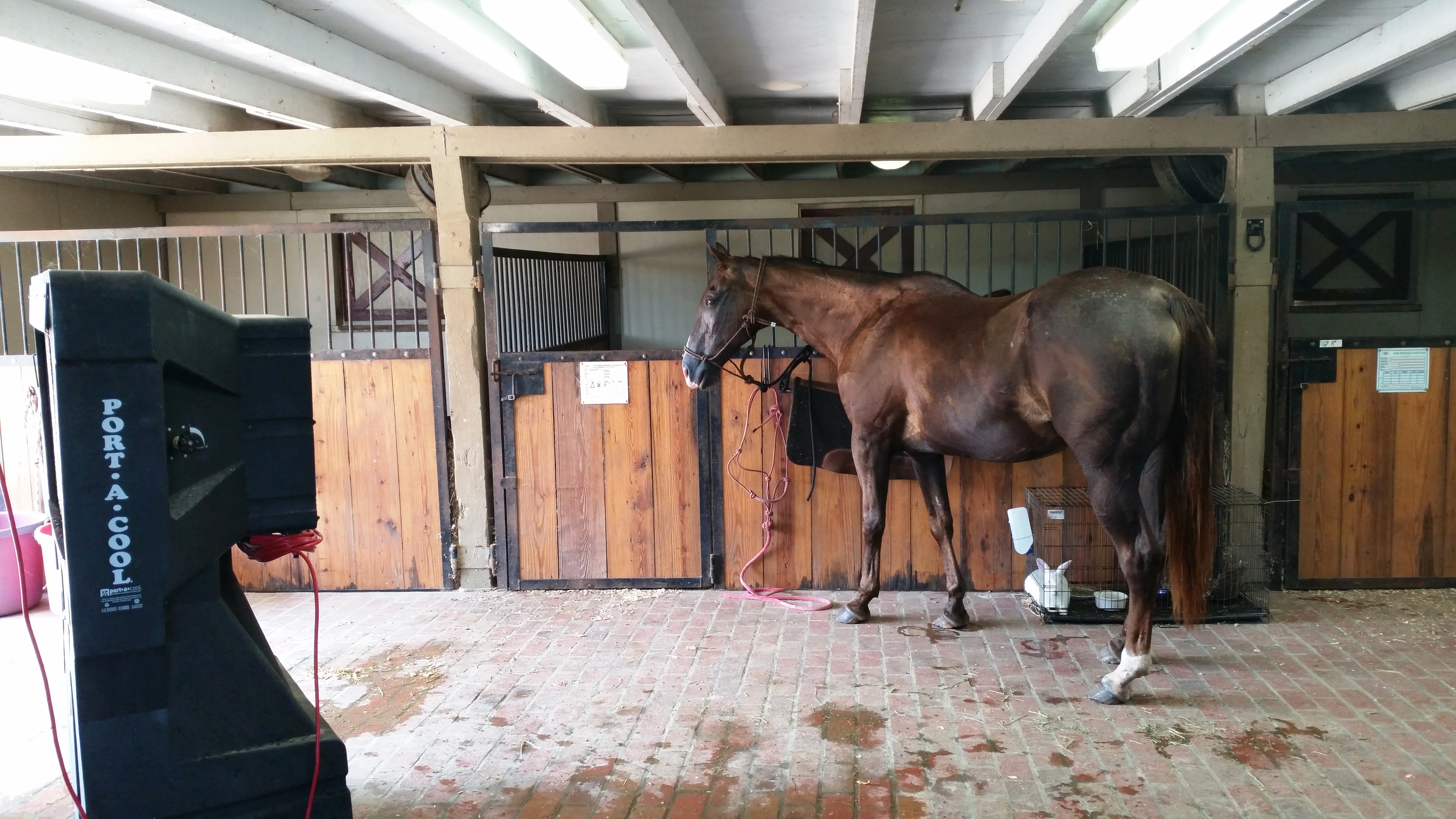 Heat, humidity put horses at risk for anhidrosis