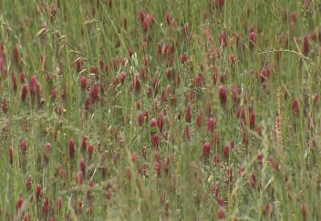 Cover crops helping improve soil quality