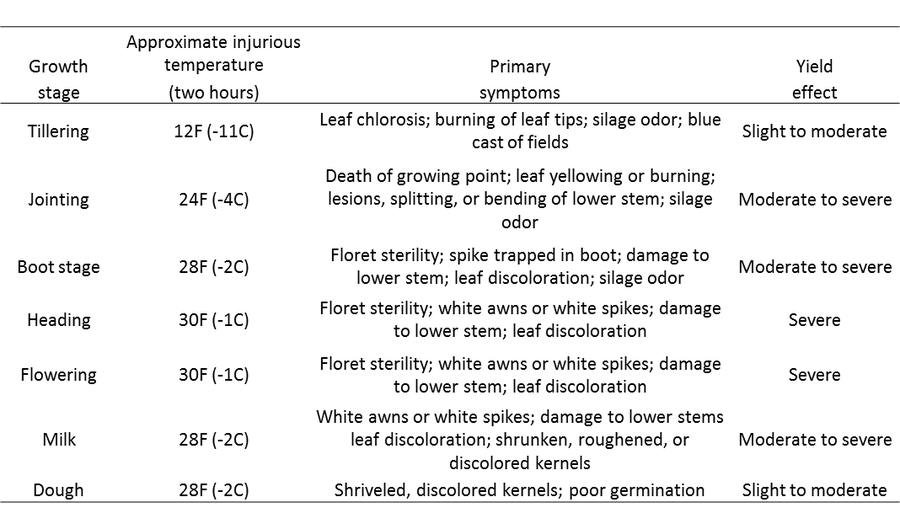 weather damage to wheat at different growth states