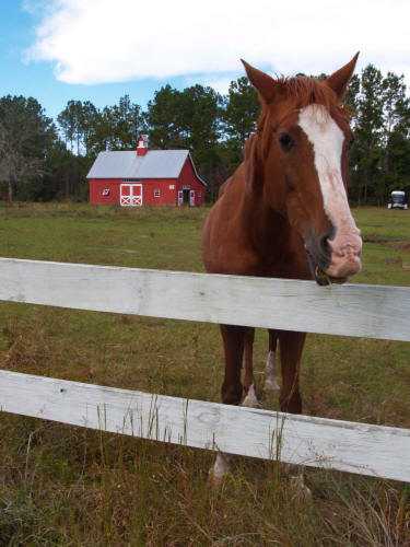 Managing Horse Stables to Protect Water Quality