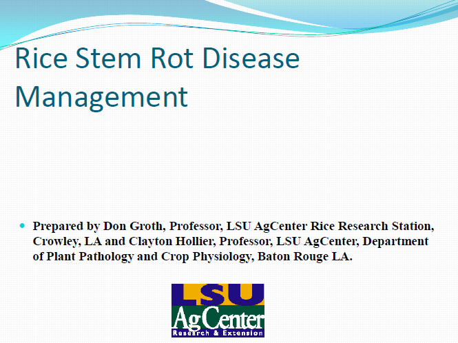 Rice Stem Rot Disease Management
