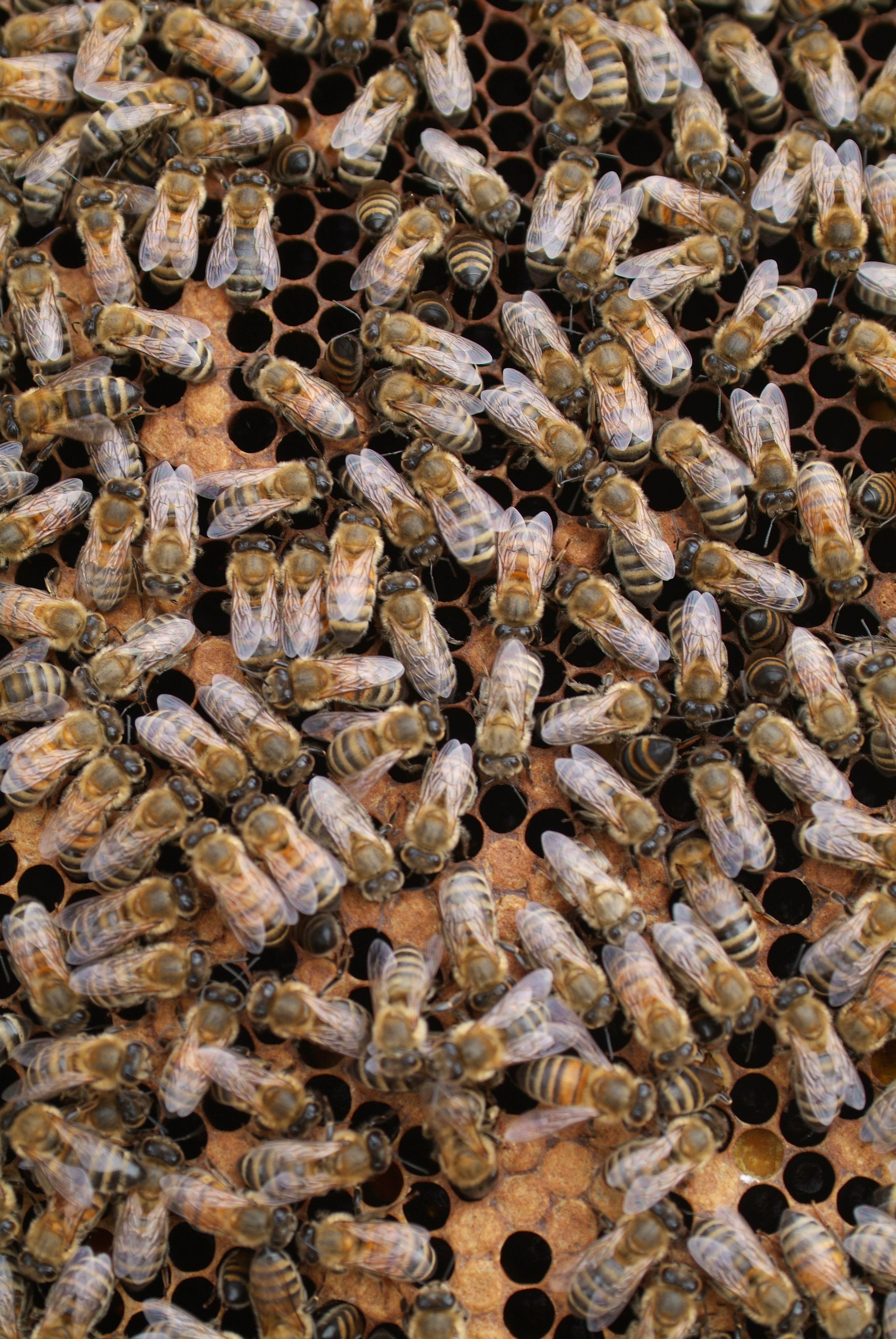 Louisiana group develops plan to protect bees