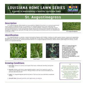 Louisiana Home Lawn Series: St. Augustinegrass