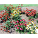 5 bedding plants named All-America Selection winners