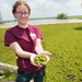 LSU AgCenter Scientists Aid Puerto Rico in Battle with Giant Salvinia