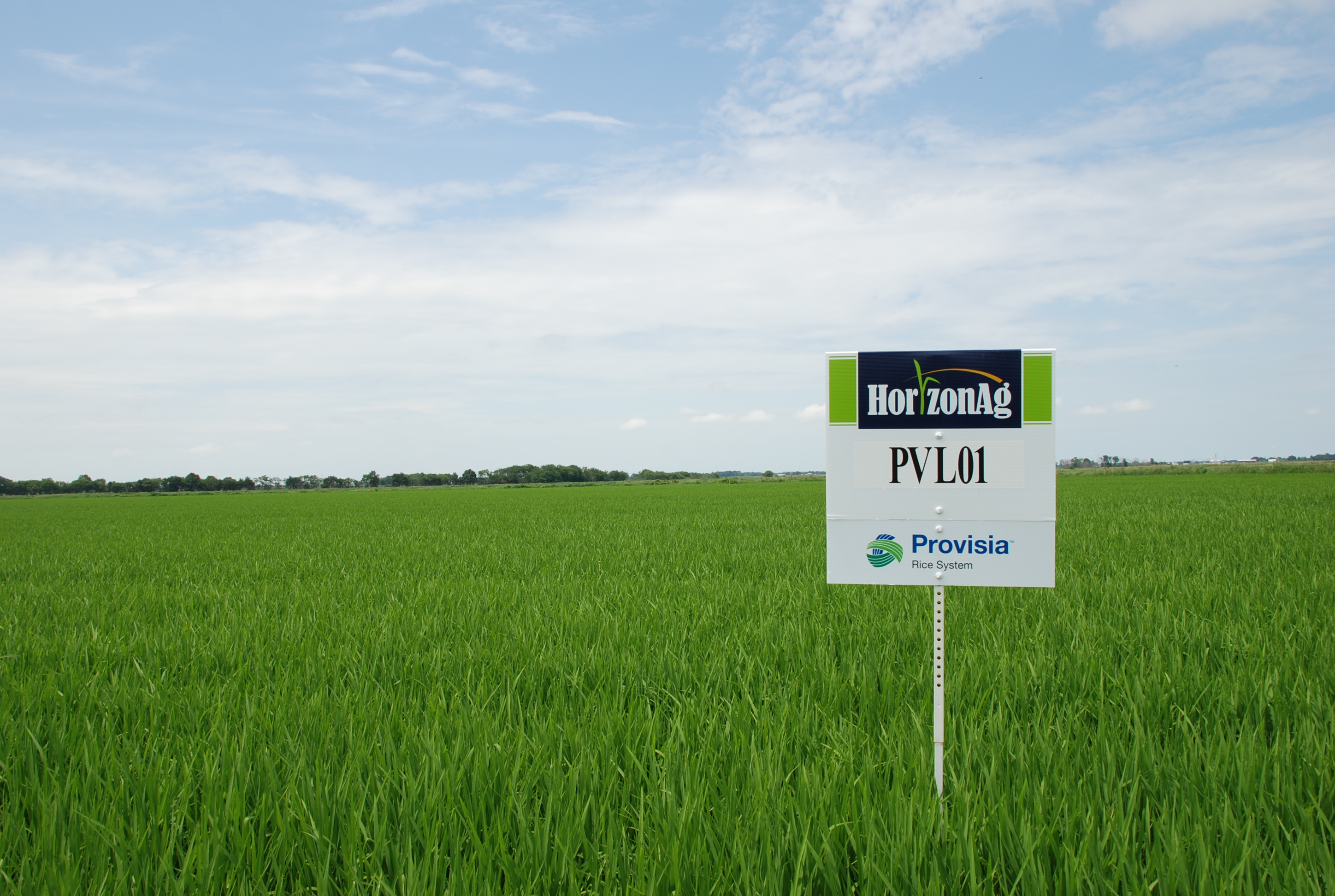 Provisia Rice Will be Valuable for the Louisiana Rice Industry
