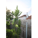 Are These Sunflowers?