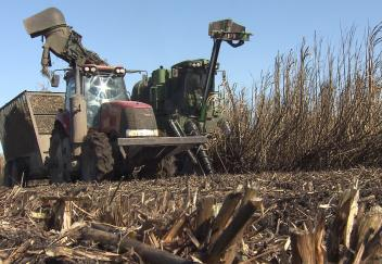 "Farmers and experts ""cautiously optimistic"" sugarcane survived freezing weather"